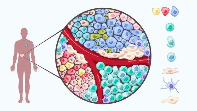 Tumor Heterogeneity