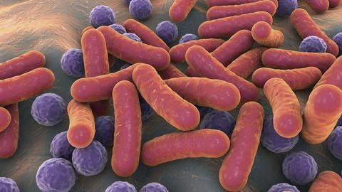 Gut Bacteria Can Boost Response to Cancer Immunotherapy