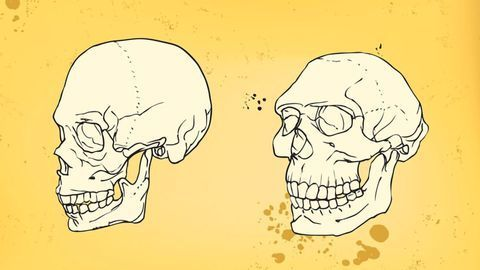 How Neanderthal Are You? Tracing Our Genetic Ancestry