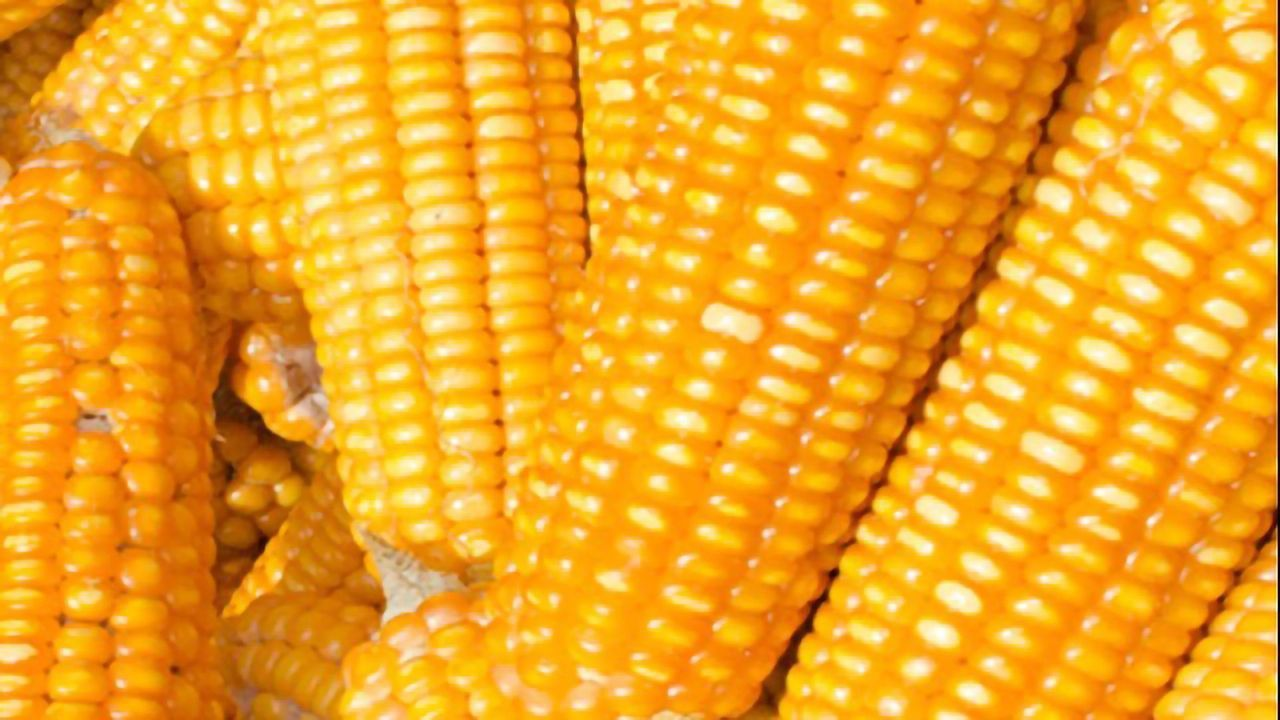 A Quantitative LC-MS/MS Method for 15 Mycotoxins in Corn-Based Animal Feed