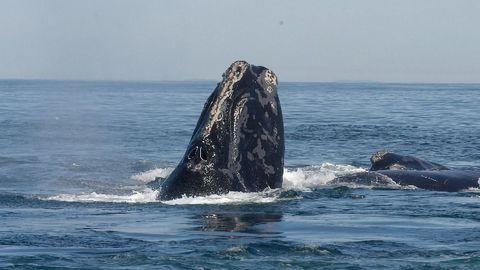AI Method Improves Detection of Rare Whale Calls