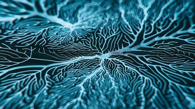 """Blood-to-Brain"" Pathway Identified in Beginnings of Alzheimer's Disease"