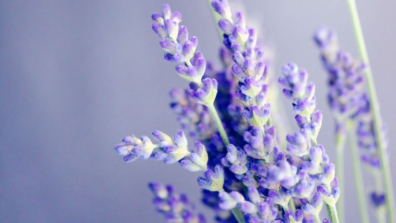 Making Sense of Scents: Emotional Brain Areas Process Smell