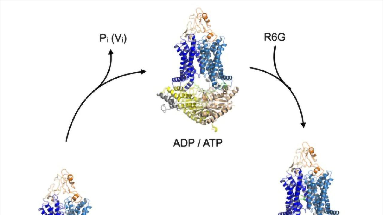 Toxin Transport in Resistant Microbes Revealed at the Molecular Level