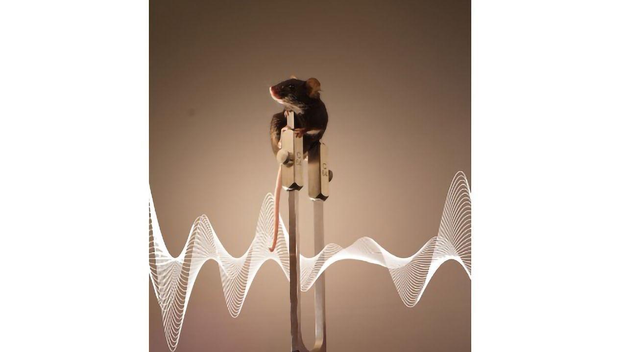 Our Brain Creates Illusions Around Vibrations