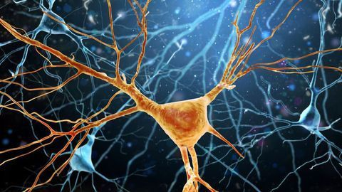 Small Molecule Reduces Neuroinflammation in Preclinical Study