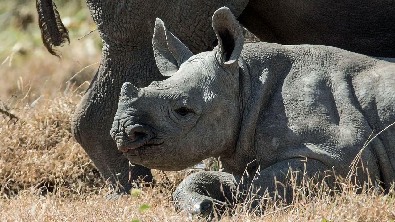 A Genomic Analysis of Eastern Black Rhinoceros