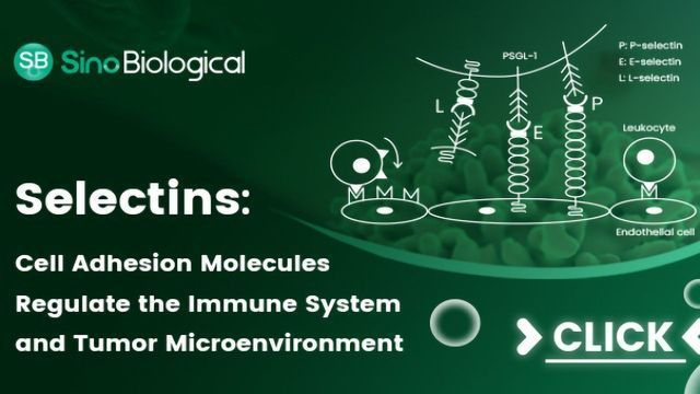 Selectins: Cell Adhesion Molecules Regulate the Immune System and Tumor Microenvironment