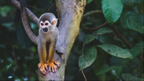 Genetic Mutation in Mice and Monkeys Interferes With HIV and Ebola