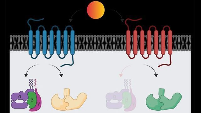 Exploring the Mechanism of a Key Class of Drug Target Proteins