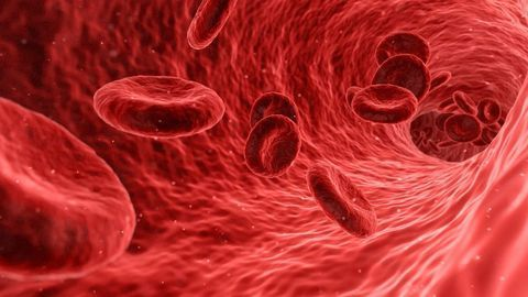 New Insights Into Blood Vessel Formation Revealed