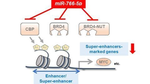 RNA Molecule Can Block Expression of a Cancer-Promoting Gene