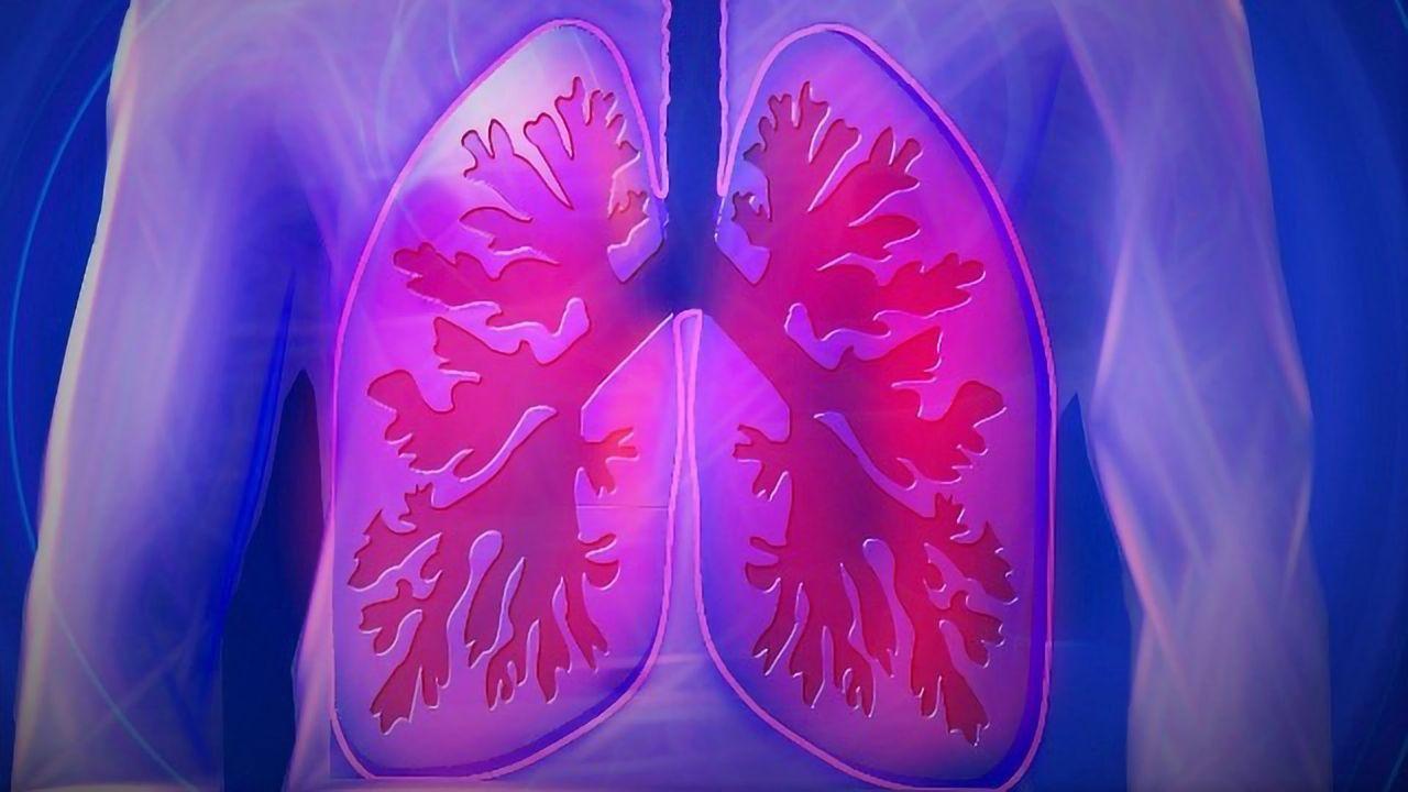 Mechanism Driving Alveoli Formation Revealed