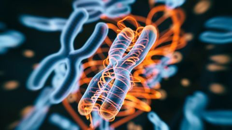 How Two Meters of DNA Is Packaged Into a Human Cell