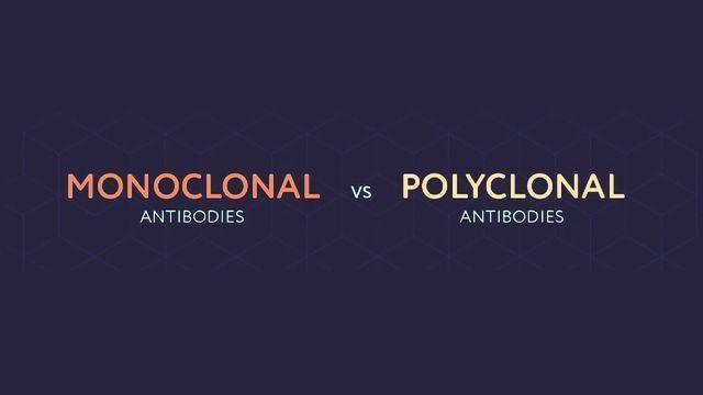 Monoclonal vs Polyclonal Antibodies