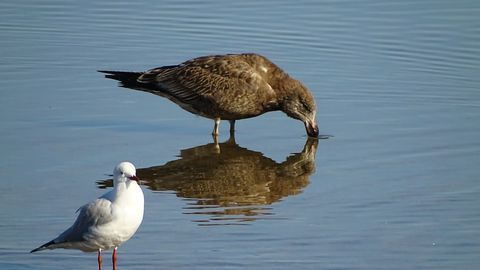 How Are Ocean Plastics Affecting Seabirds?