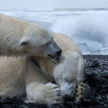 Daunting Outlook for Year-Round Sea Ice and Its Ecosystems