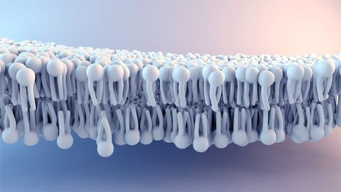 Highly Reproducible & Efficient Phospholipid Removal