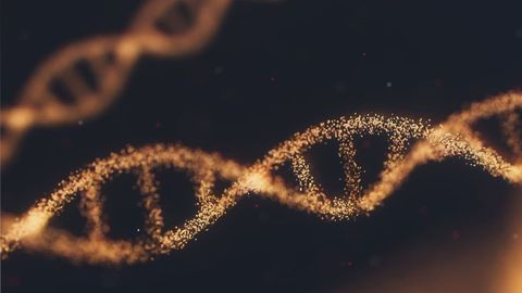 Unicellular Organism Is Missing Genes That Are Vital to Copying and Distributing Its DNA