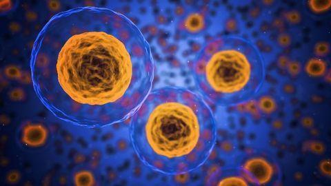 A Regenerative Reset for Aging
