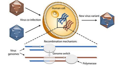 New Study Probes Mechanisms Behind Viral Variants