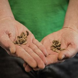 Driving Innovation in Insect Farming