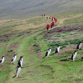 Evidence of Prehistoric Human Activity in Falkland Islands Discovered